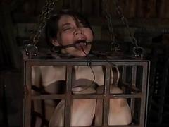 Torturing beautys fuck holes